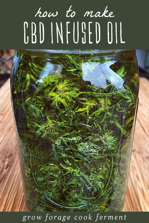 a jar of high CBD cannabis infusing in oil