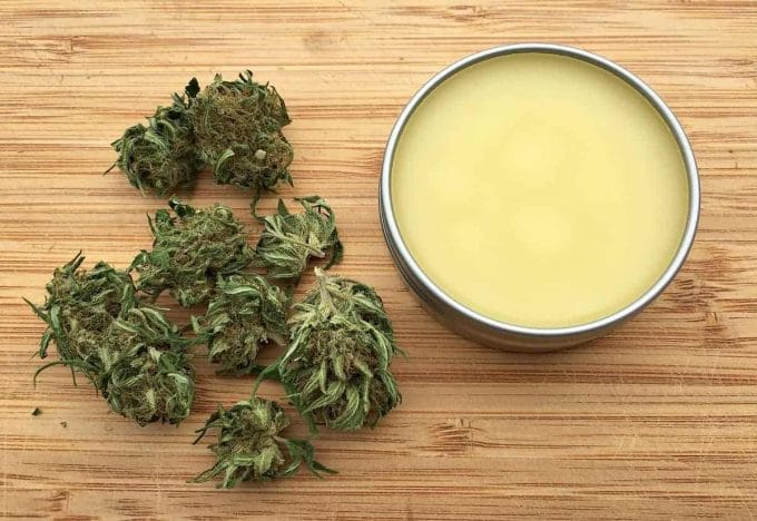 a tin of cbd salve with fresh cannabis buds